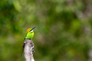Lush Green Bandipur