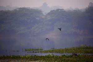 OKHLA BIRD SANCTUARY: PEACE AMIDST OF CITY