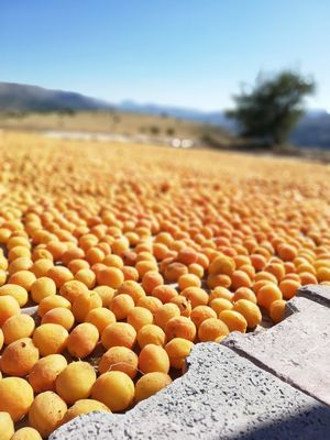 Malatya, where best apricot of the world can be found.