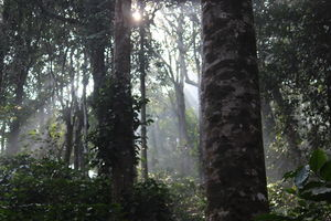 Nature love-Coorg