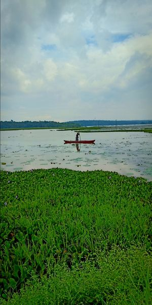 Vellayani a Village Beauty : Vellayani Lake, Water lillys, a good place for bird watch and fishing