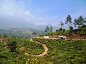 Have Only 48 Hours in Munnar? Here's A Complete Guide On What To See And Do