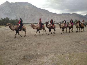 Double humped Camel Safari
