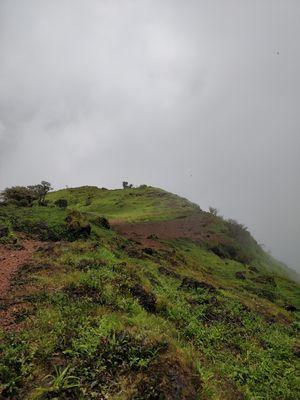 Beauty of kodachadri hills