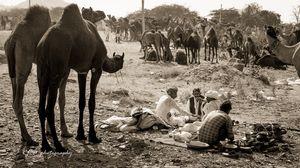 A Nomadic life of villagers at Pushkar Mela
