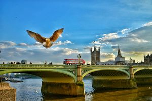 Fly high, mighty seagull  . . . This picture was captured last year on my tour to the United Kingdom