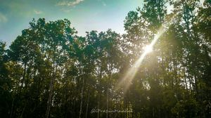 First ray of sun throgh the deep wood #northeastphotos #forestlife #wood #BestTravelPicture