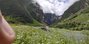 Valley of flowers showing the best of uttarakhand