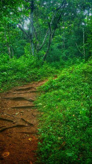 A heaven ride in thenmala dam
