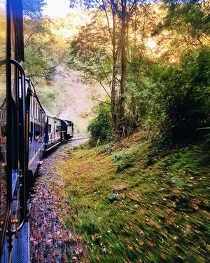Don't miss a chance to ride on the 100 year old Nilgiri Railways when in Ooty.