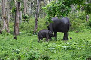 Mothers Love is Priceless.Nature closely seen at Bandipur