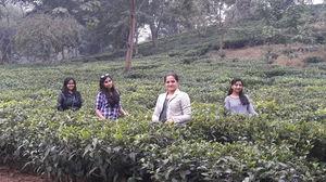 On the way to topatuli.... tea garden.. we northeast girls