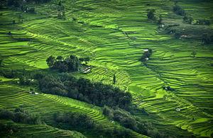 Bada Honey Rice Terrace #TripToTakeMeToGoa