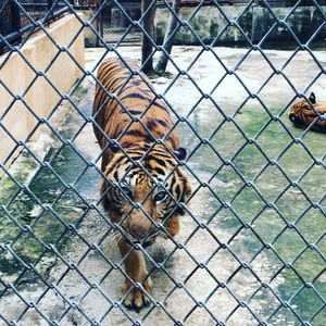 Sriracha Tiger Zoo 1/undefined by Tripoto