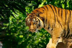 Sariska Tiger Reserve: A lush abode of Royal Bengal Tiger