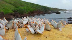 #Calangute beach????️????️???? #tripotocommunity????????????