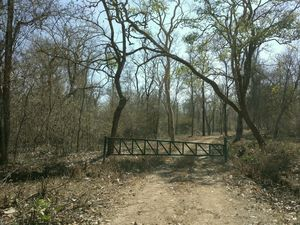 The Scariest Road in India |Nagarhole National Park, Hunsur(Best jungle destination)..