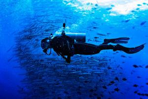 Unexplored Underwater Haven: Sipadan, Malaysia