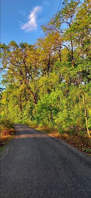Roadtrip from Haldwani #Naisila trail
