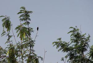 Delhi Chronicles: Asola Bhatti Wildlife Park