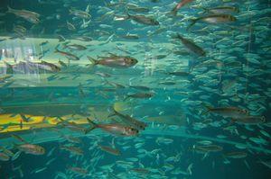 Ripley's Aquarium Of Canada 1/1 by Tripoto