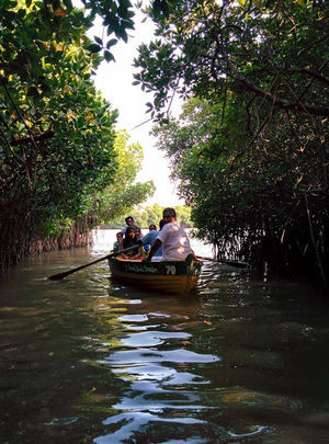 Pichavaram Mangrove Forest 1/1 by Tripoto