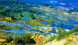 5 Mesmerizing Rice Terraces In Asia!