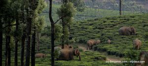 Sinna Dorai, Valparai, Wildlife Photography