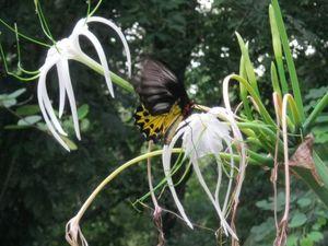Butterfly Park Tasik Perdana Kuala Lumpur Federal Territory of Kuala Lumpur Malaysia 1/undefined by Tripoto