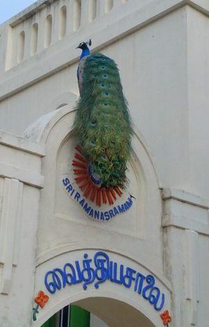 Golden Ramana in Sri Ramanasramam 1/3 by Tripoto