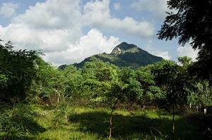 Tryst with Tiruvannamalai