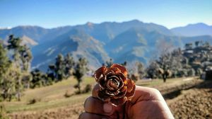 unexplored Mountains full of flowers