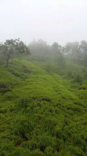 Tamhini ghat: Natures gift to you. Unpack it. Cherish it. Protect it.