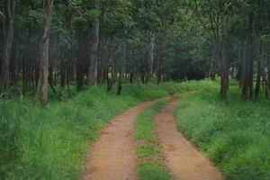 "More than ""just a Zoo"": Tavarekoppa Lion & Tiger Safari, Shimoga"