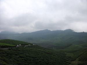 Munnar – Treasures hidden behind the mist