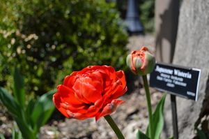 Brooklyn Botanic Garden 1/6 by Tripoto
