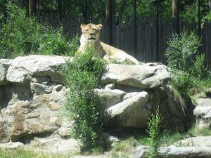 Zoo Boise 1/8 by Tripoto