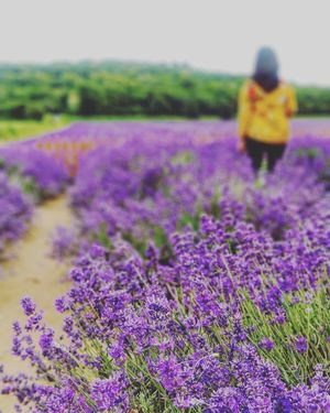 The day I was left lavender-eyed #mydiscovery