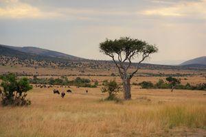 Kenya| Masai Mara| Watamu| Nairobi| Honeymoon