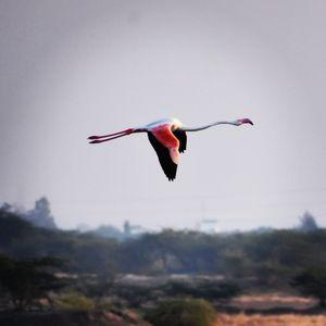 Bird watching @ Khijadiya Bird Sanctuary, Gujarat