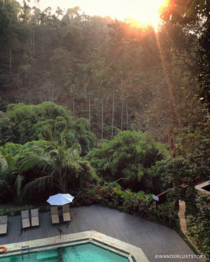The Greenscape of Wayanad