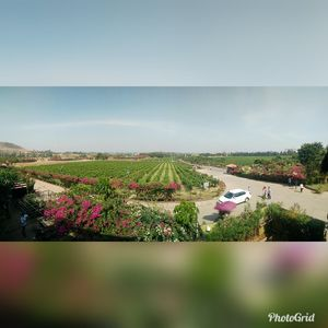 """High"" noon in Sula Vineyards"