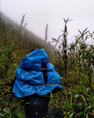 A trek to paradise: Dzukou Valley, Nagaland