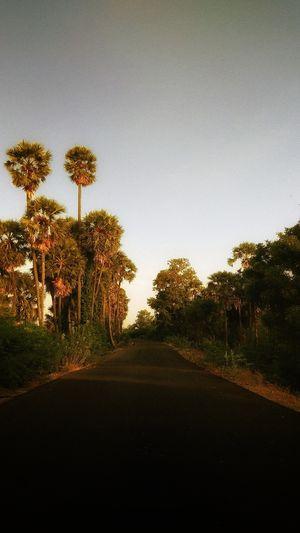 The Scenic Roads