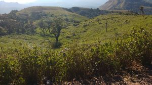 Land of Coffee Plantation: Chikmagalur