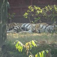 Nandankanan Zoological Park 4/9 by Tripoto