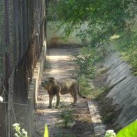 Nandankanan Zoological Park 5/9 by Tripoto