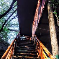 Tree House Resort | Jaipur 5/9 by Tripoto