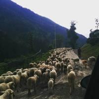 Aru Valley 5/11 by Tripoto