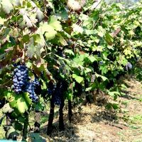 Sula Vineyards 5/43 by Tripoto